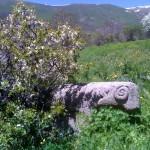 Steinschaf auf dem Weg nach Teghenyac